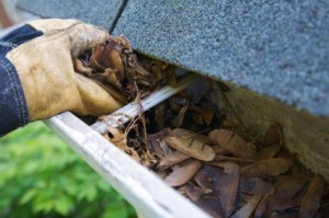 canberra gutter cleaning